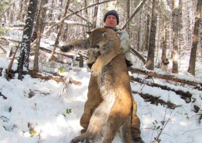 photo_2013_05_cougar-ynx-bobcat-wolf-guided-hunting-trips-in-british-columbia