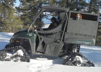 photo_2013_07_cougar-ynx-bobcat-wolf-guided-hunting-trips-in-british-columbia