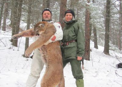 photo_2013_13_cougar-ynx-bobcat-wolf-guided-hunting-trips-in-british-columbia