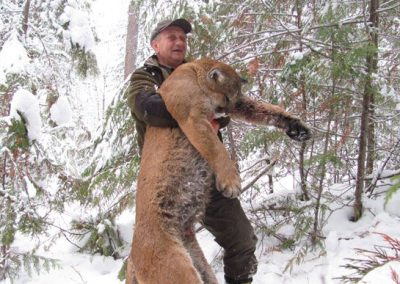 photo_2013_14_cougar-ynx-bobcat-wolf-guided-hunting-trips-in-british-columbia