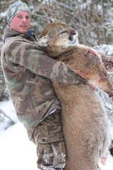 photo_325_cougar-ynx-bobcat-wolf-guided-hunting-trips-in-british-columbia
