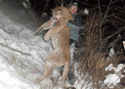 photo_334_cougar-ynx-bobcat-wolf-guided-hunting-trips-in-british-columbia