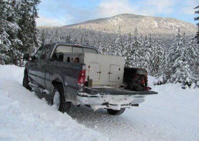 photo_401_cougar-ynx-bobcat-wolf-guided-hunting-trips-in-british-columbia